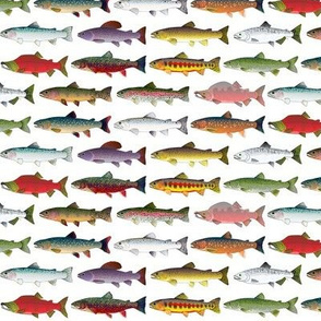 14 Trout and Salmon Pattern