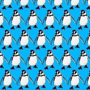 Smiling Humboldt Penguin in blue