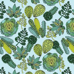 Succulents blue