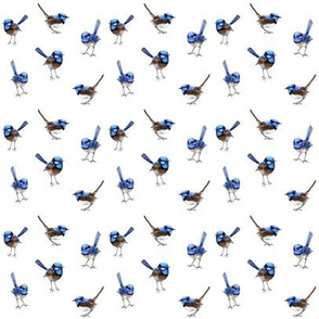 Mini Blue Wren Watercolor Australian Birds