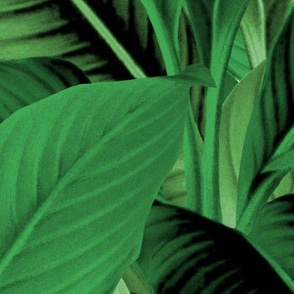 Palm In Palm ~ Jungle Green