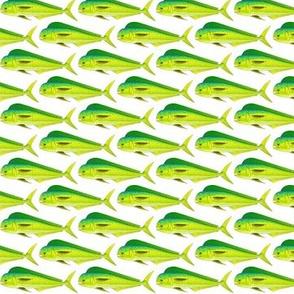 Mahi-Mahi Dolphinfish pattern