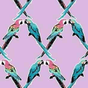 Parrot Argyle