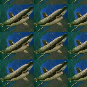 X marks the happy shark spot