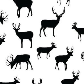 Black_and_White_Deer_Roaming