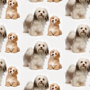 Havanese Mom and Pup