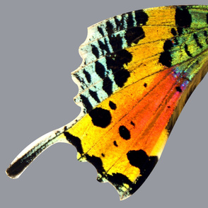 """Super Oversized Sunset Moth Pt 2 (sized for at least 42"""" fabric)"""
