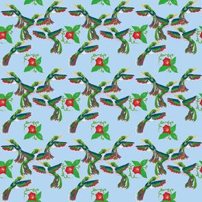 Fourth of July Hummingbirds