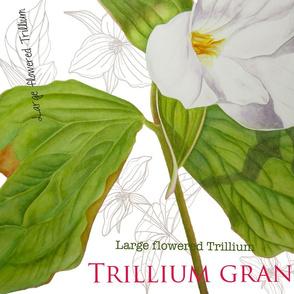 trillium tea towel