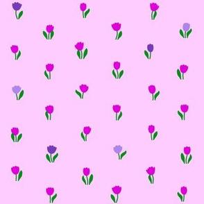 Tulip Blossom 2015
