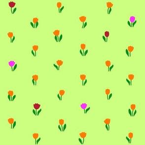 Tulip Meadow 2015