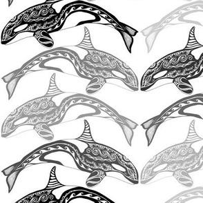 Orca Greys n White