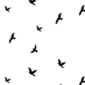 Birds  Black& White