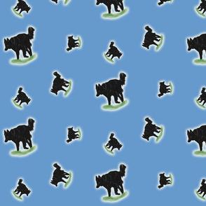Herding Belgian Sheepdogs - blue