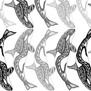 Orca white and greys rotated