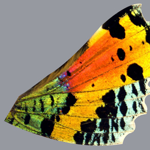 """Super Oversized Sunset Moth Pt 2 (sized for at least 54"""" fabric)"""