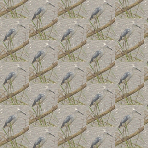 Alternate Plumage Little Blue Heron