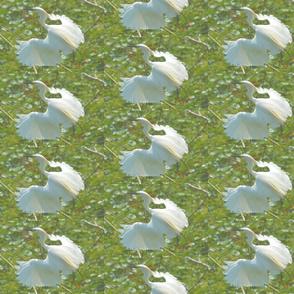 Breeding Plumage Snowy Egret