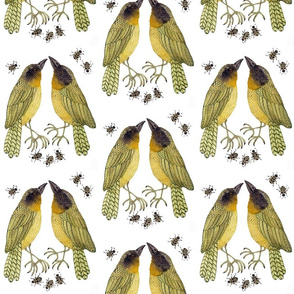 Yellowthroats
