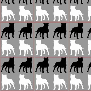 Bull Terrier Black,White and Gray