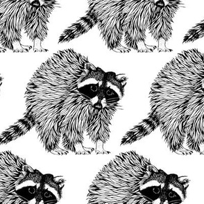 Raccoon Black n White
