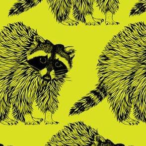 Raccoon Lime