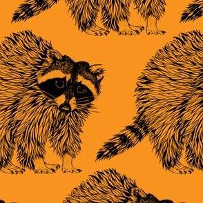 Raccoon Orange