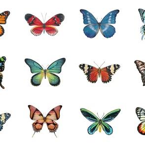 Large Butterflies for Pillows