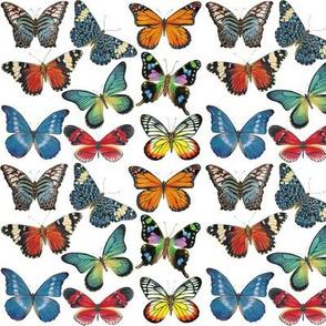 Sm Butterflies