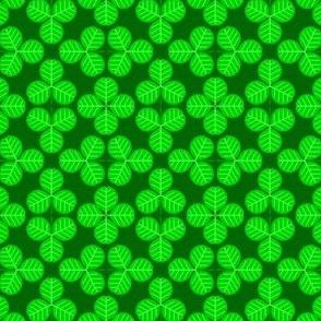 00504248 : shamrock clover 4m dense