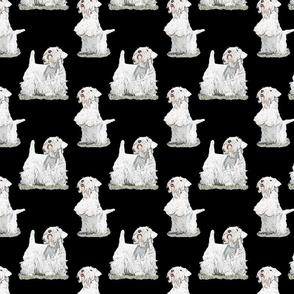Posing Sealyham terriers - black