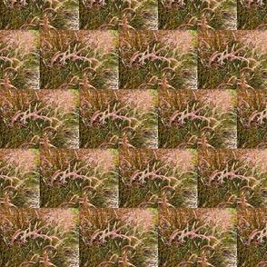 pink grass 2