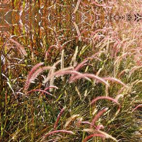 pink grass 1