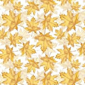 Yellow marple leaves