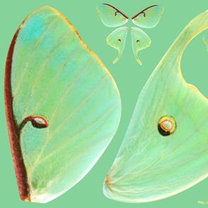 Medium Luna Moth Wing Fabric