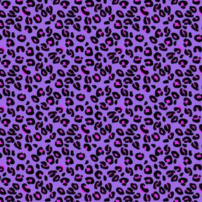 Leopard Spots Orchid