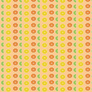 citrus slices in rows