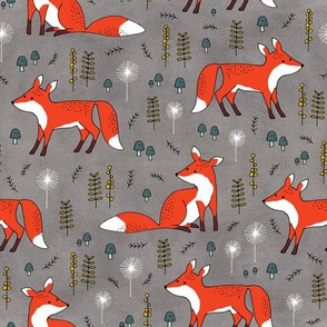 foxes on gray