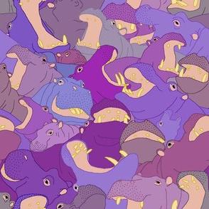 Laughing Hippos - Purples
