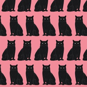 cat black cat pink sweet kitten cat lady cats