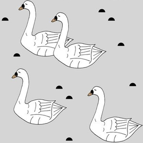 Swans Gray