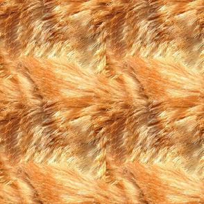 Orange Tabby Fur