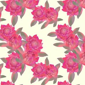 Proteas Cream