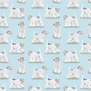 Playful Wire Fox Terrier - blue