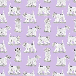 Playful Wire Fox Terrier - purple