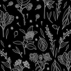 Autumn plants black