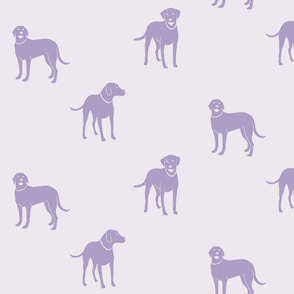 Lavender Labradors