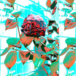Red_camelia_psychedelic-ed