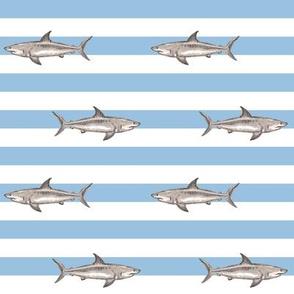 demi stripes sharks