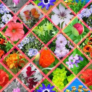 Large Pink Geometric Photographic Flowers